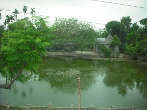 A pond from Martin's visit to Bangladesh. Ponds like this often provided the water for families or villages